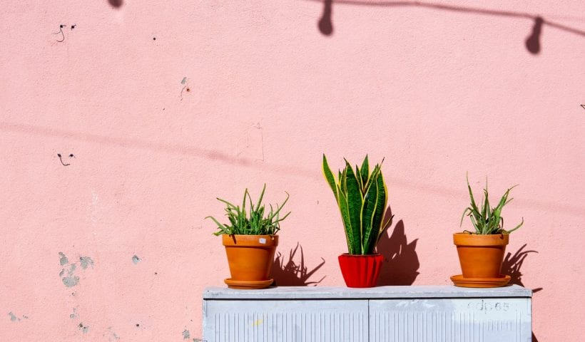 Three potted plants on a sunny balcony