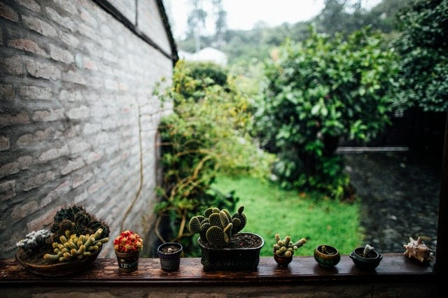 Row of succulents on wooden balustrade