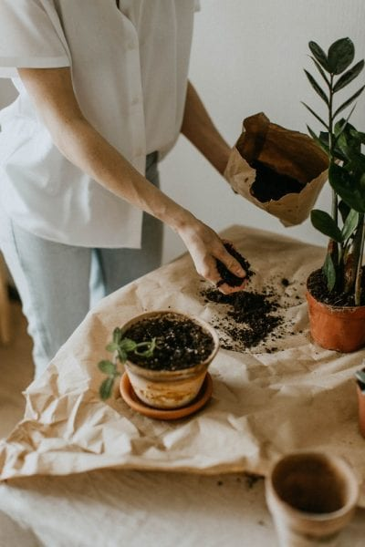 Person handling potting soil and potting plants