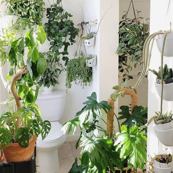 bathroom toilet plants